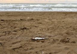 دریای خزر در حال تبدیل به باتلاق خزر است