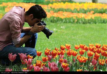 بوییدن کدام گلها خاصیت درمانی دارد؟