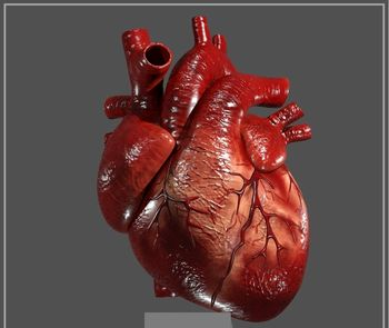 تاثیر شغل بر سلامت قلب