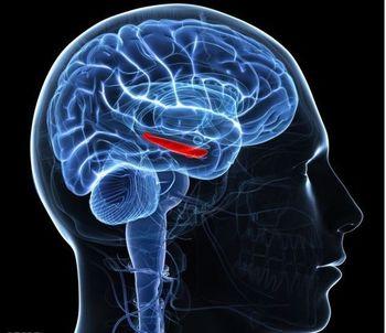 5 ابزاری که به تقویت حافظه کمک میکنند