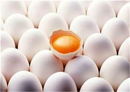 دلایل گرانی تخم مرغ در بازار